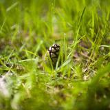Foto på en kotte i gräset.
